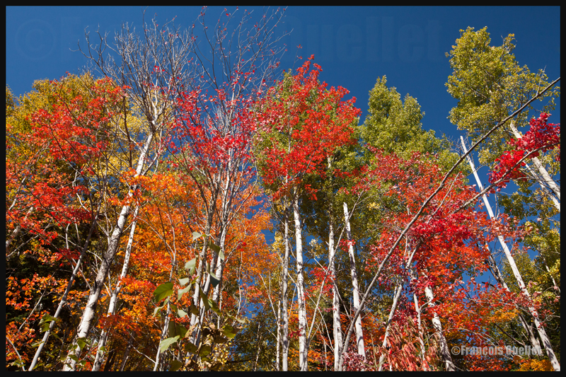 Couleurs d'automne près de Baie St-Paul