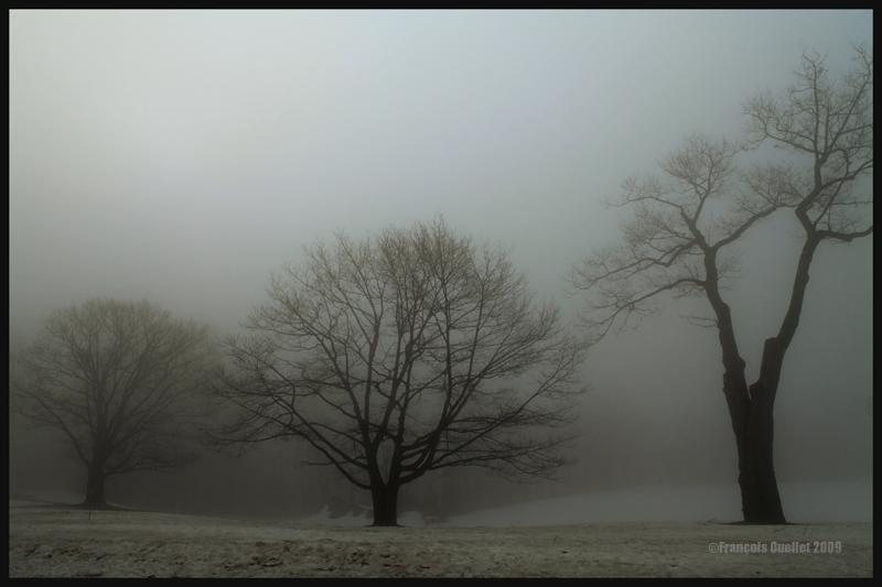Arbres dans le brouillard au Domaine Cataraqui, Ville de Québec 2009