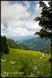 Sentier en provenance du Moleson, Suisse 2013