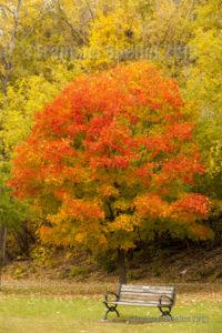 Arbres aux couleurs de l'automne à Ottawa en 2015