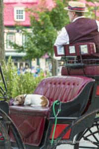 Vie de chien dans le Vieux-Québec.