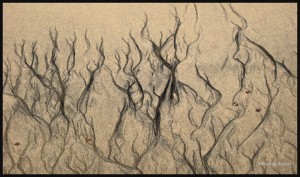 2007-0531-Plage-Sillery-Web