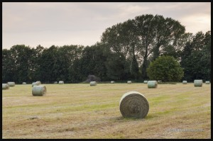 IMG_5593-Farmers-field-near-Cambridge-England-2015-web