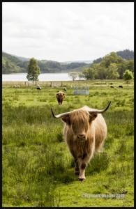 IMG_6156-Scotland-2015-web