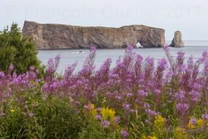 Rocher-Percé-et-fleurs-copy-web